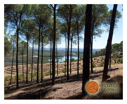 Hostal La Coneja - La Zarza - Andévalo de Huelva - Pinares